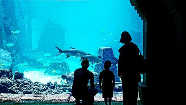 Bahamas Atlantis, Bahamas.  Aquarium Nassau Nassau, Bahamas Nassaubahamas Paradise Island Cable Beach Atlantis Bahamas Atlantis Hotel Sharks Diving Aquariumfish Silhouette Silhouettes