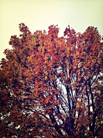 MaxArt Autumn Colors Of Autumn Tree