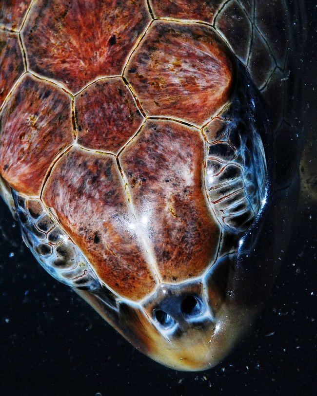 Maximum Closeness Sea Ocean Turtle Sea Turtle Cayman Islands Caymanislands Turtle Farm, Cayman