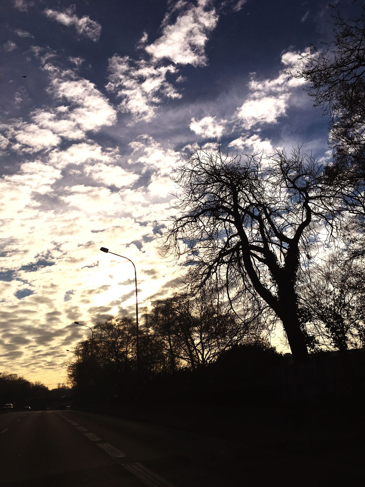 Sky Tree Transportation No People Cloud - Sky Silhouette Nature Road Outdoors The Way Forward Day