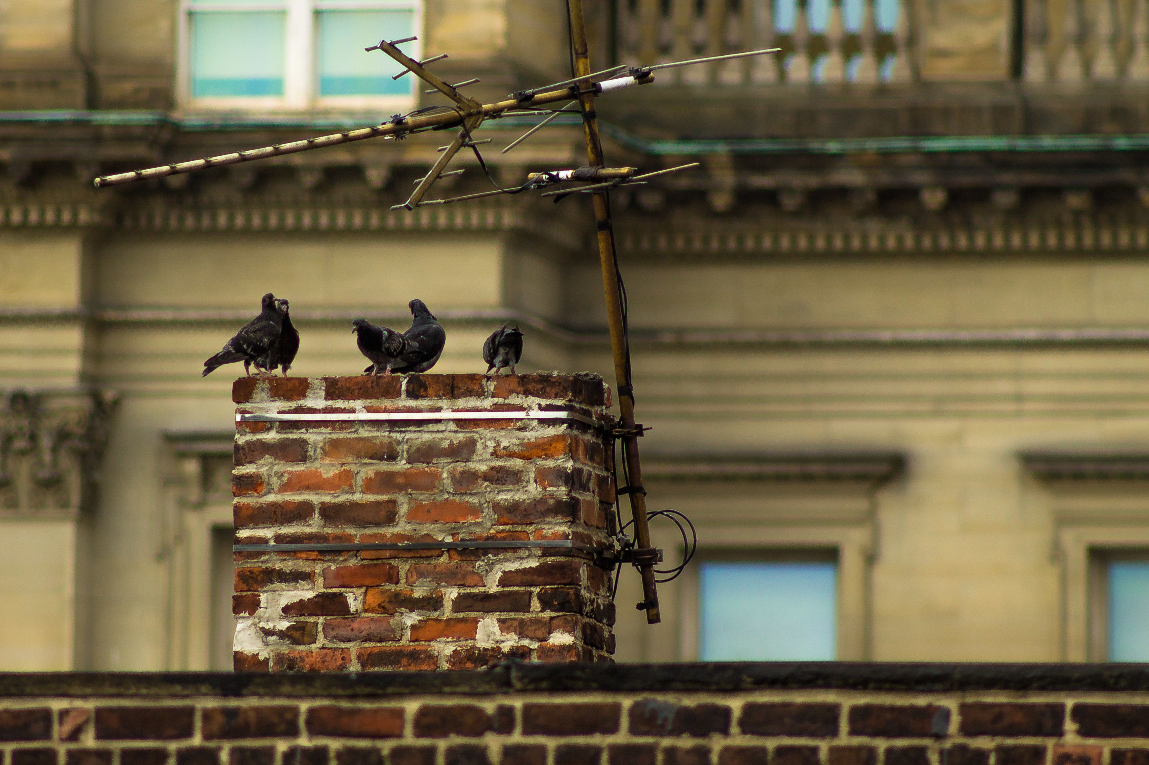 animal themes, animals in the wild, building exterior, built structure, architecture, bird, one animal, wildlife, focus on foreground, perching, outdoors, close-up, day, railing, no people, pigeon, window, metal, old, building