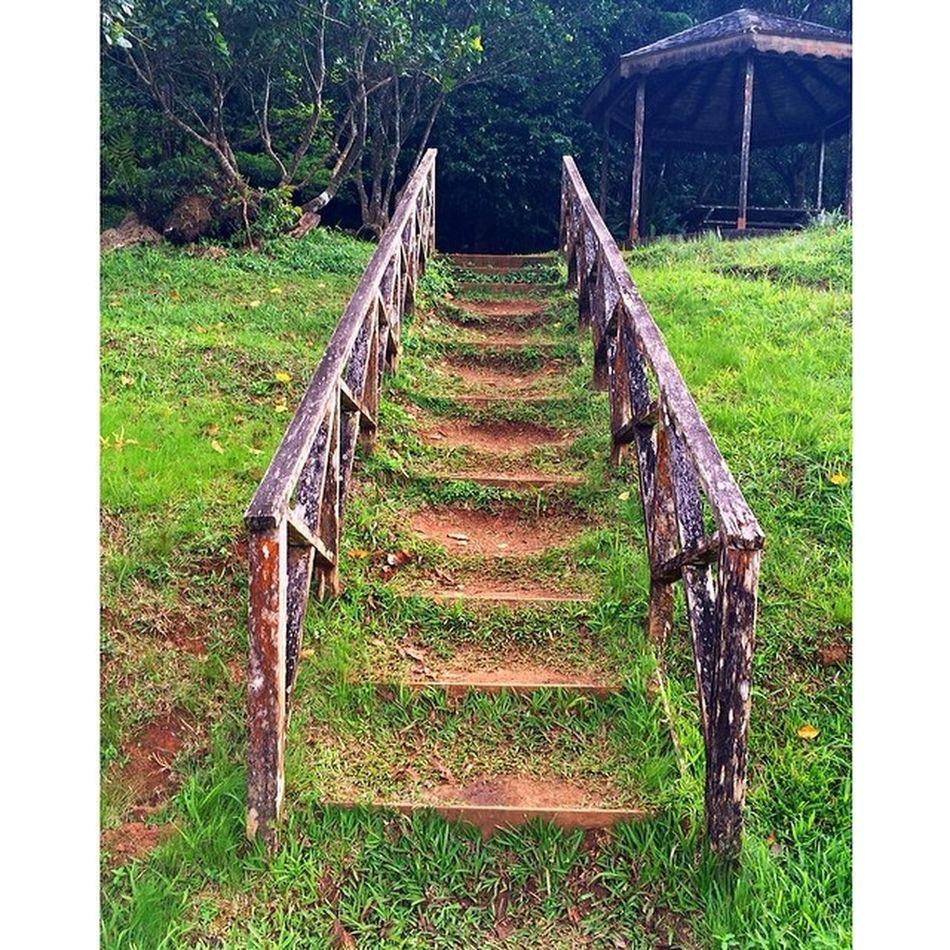 Naturewalks Nature Ilivewhereyouvacation Islandlivity Instapretty Islandlife Instagram Iphone5s Wu_caribbean Westindies_colors Westindies_people Allshots_ Ourbestshots Granndetang Grenada Greenz