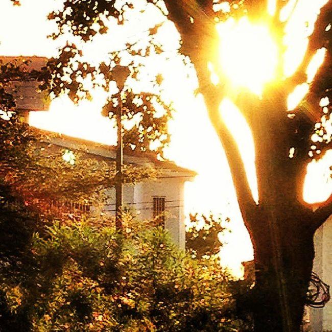 Dotspin Betosalvestrini Art Original Natural City Venezuela Sanjuandecolon