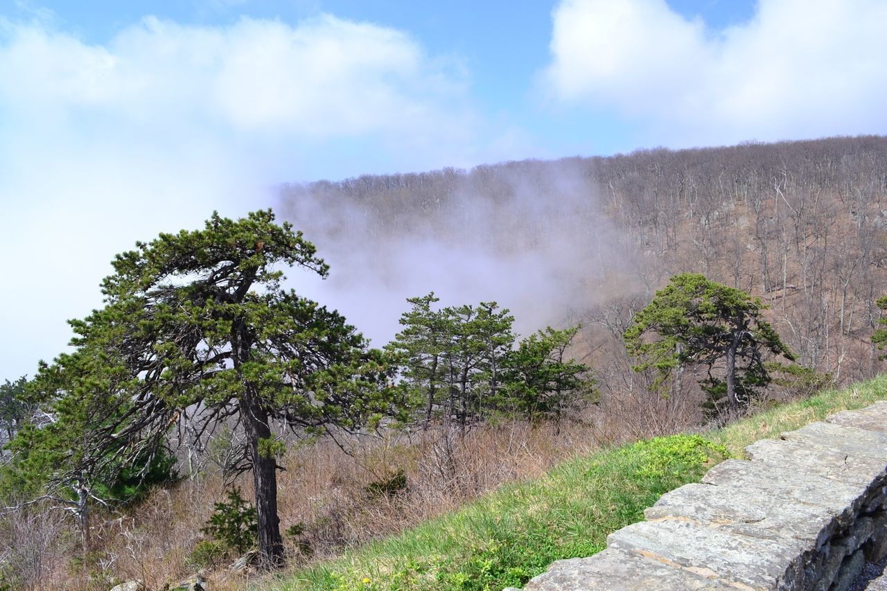 Cloud Mountain Nature No People Non Urban Scene Non-urban Scene Outdoors Scenics Tree