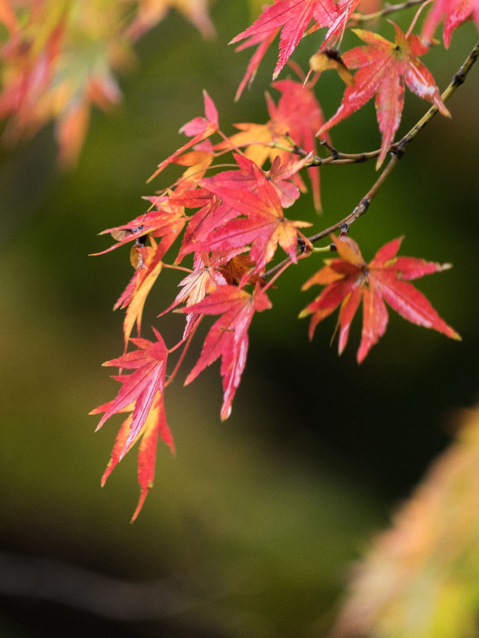 Orange Leaves On Branches
