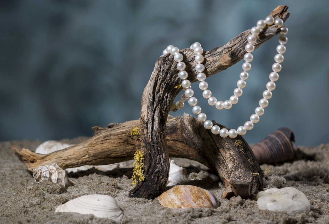 Blurred Background Close-up Drift Wood  Drift Wood On Beach Focus On Foreground Necklace No People Pearl Necklace  Pearls Product Photography Sand Sea Shells Sea Shells In Sand Selective Focus Shells Studio Photography