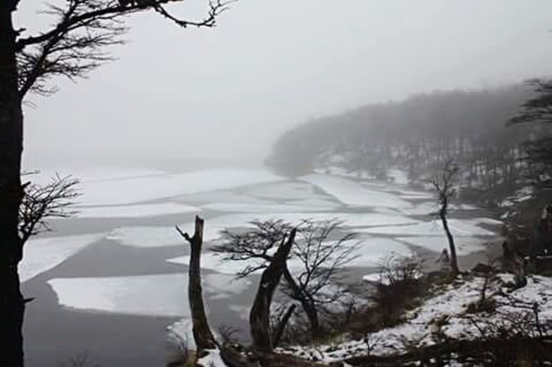 Blanco y negro a color. Forest Ice Lake El Chalten Mist Unreal Incredible Afortunada Nature_collection