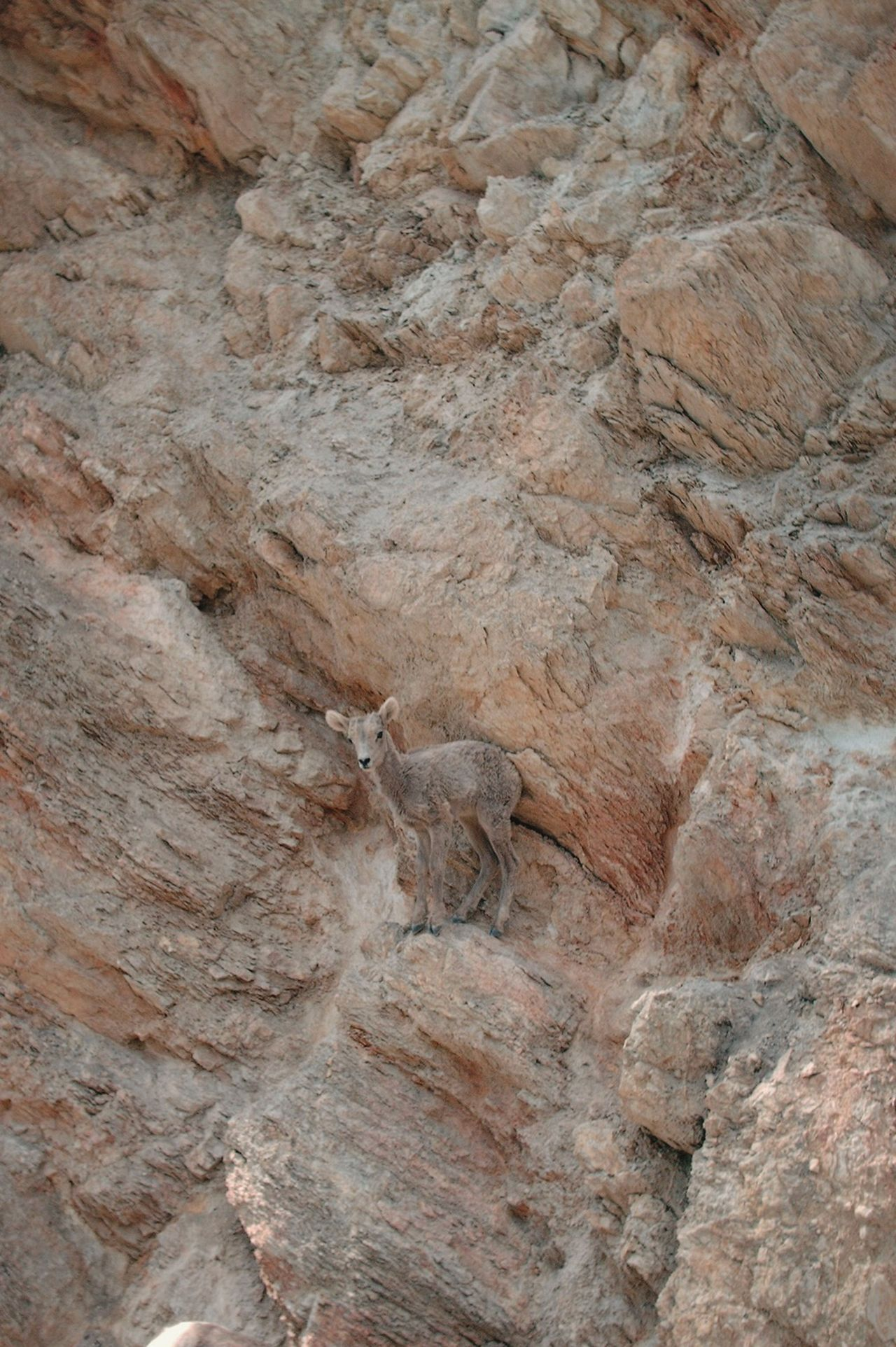 Camouflage Nature_perfection Wildlife & Nature Goat Baby Goats Hide And Seek I See You Now You See Me