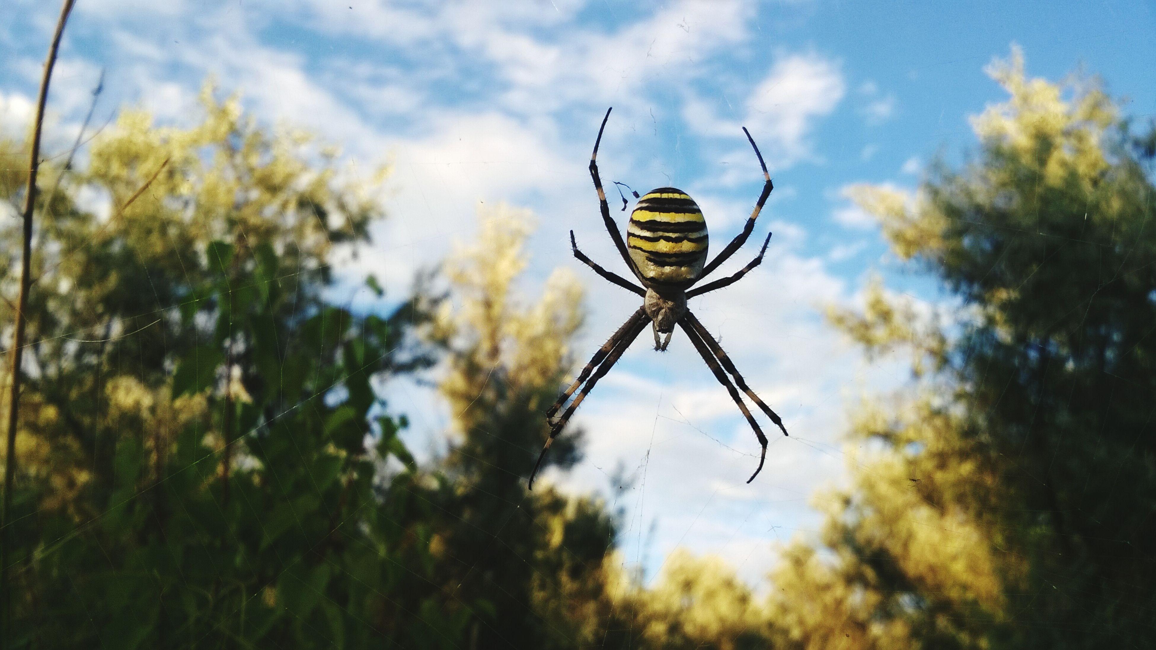 Spider Hexapod Beautiful Nature