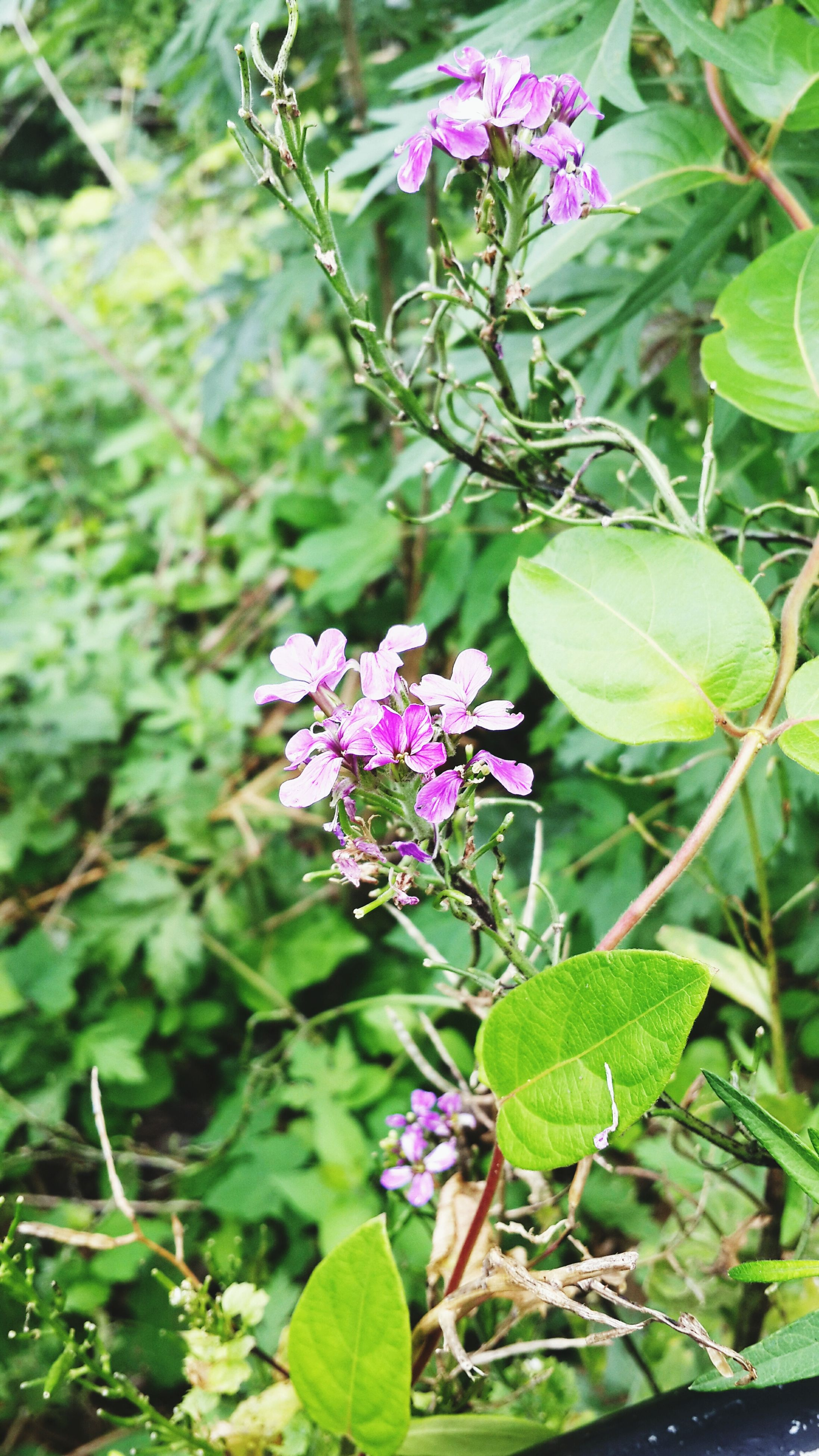 flower, freshness, growth, leaf, plant, fragility, purple, green color, beauty in nature, nature, petal, focus on foreground, close-up, blooming, pink color, one animal, flower head, insect, stem, outdoors