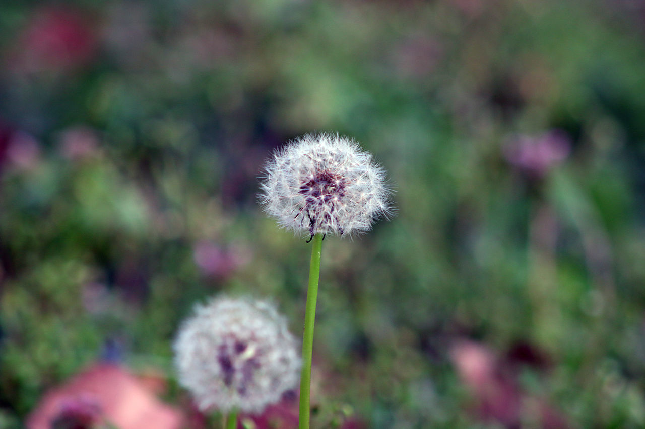 Beauty In Nature Close-up Day Flower Flower Head Focus On Foreground Fragility Freshness Growth Nature No People Outdoors Plant