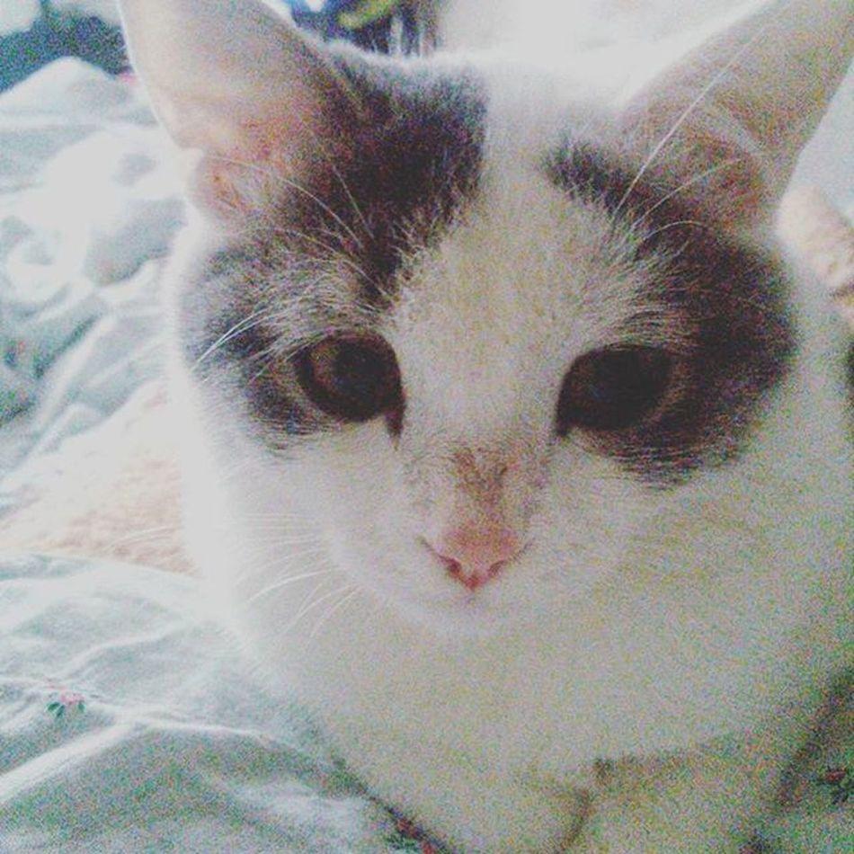 Вот ты просыпаешься, а на тебе сидит эта морда, и выжидает 😁 Goodmorning Goodsaturday Kitty Cat Mylove
