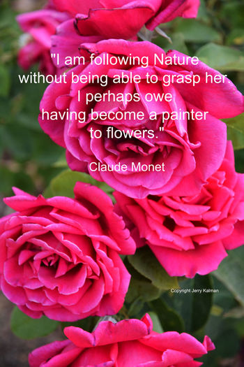 Artist #ClaudeMonet birthday and prescient quote with #roses in a #Fallbrook garden. If this #quotograph speaks to you, please share with others Artist Bii Birthday Claude Monet Claude Monet's Garden Fallbrook Jerry Kalman Pink Quotograph