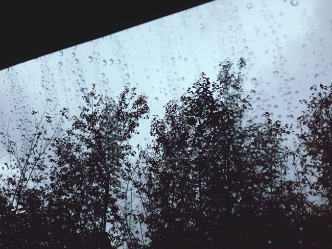 Rain Raindrops Rainy Day Window Glass Tree
