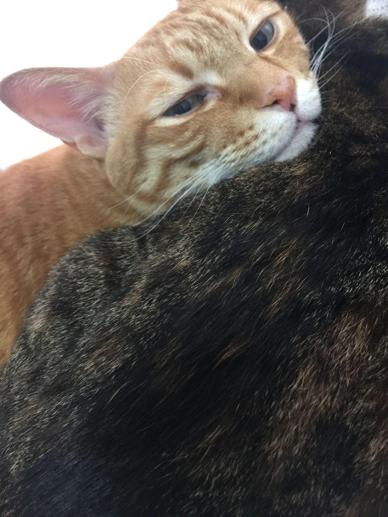 おやすみ。 Mycat うちの猫 おやすみ Goodnight