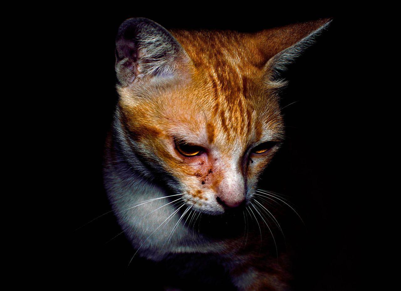 Cat Cats Pets Pet Kitty Kitten Animal Animals Mammal Mammals Fur Night Black Dark Moment Orange Color Homeless Homeless Cats EyeEmNewHere The Portraitist - 2017 EyeEm Awards