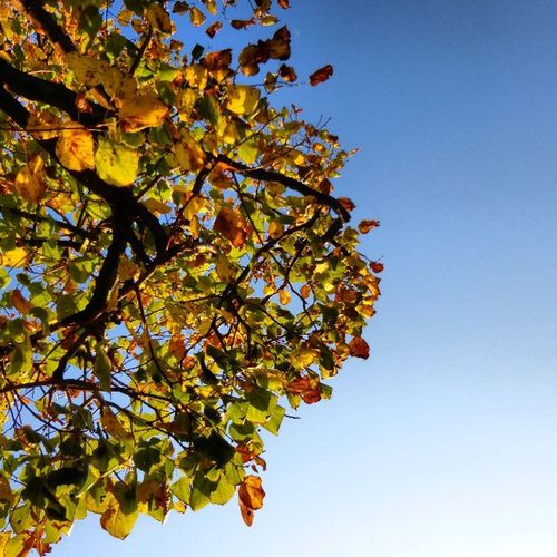 Leaves to the wind, blue to the sky... Autumn Leaves Sky Vienna wien