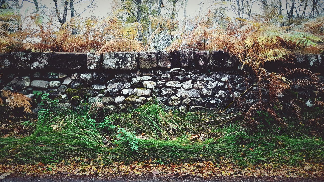 This Is Autumn day 30. Orange Ferns Orange Ferns Autumn Autumn Colours Beauty In Nature Outdoors Brick Wall Dry Stone Wall Scotland Layers Layers And Textures