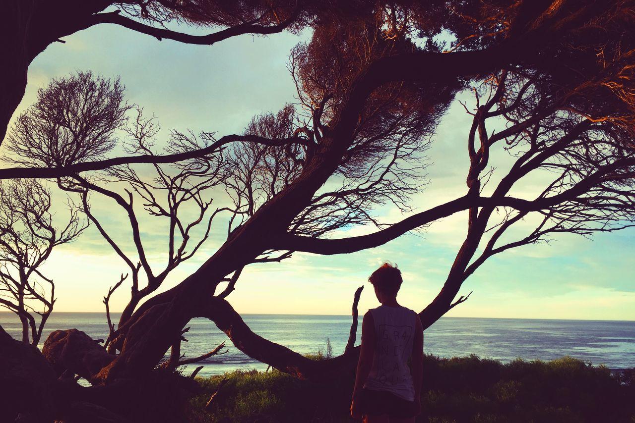 Windswept Trees Landscape Afternoon Windswept Portrait Mood Australia WesternAustralia