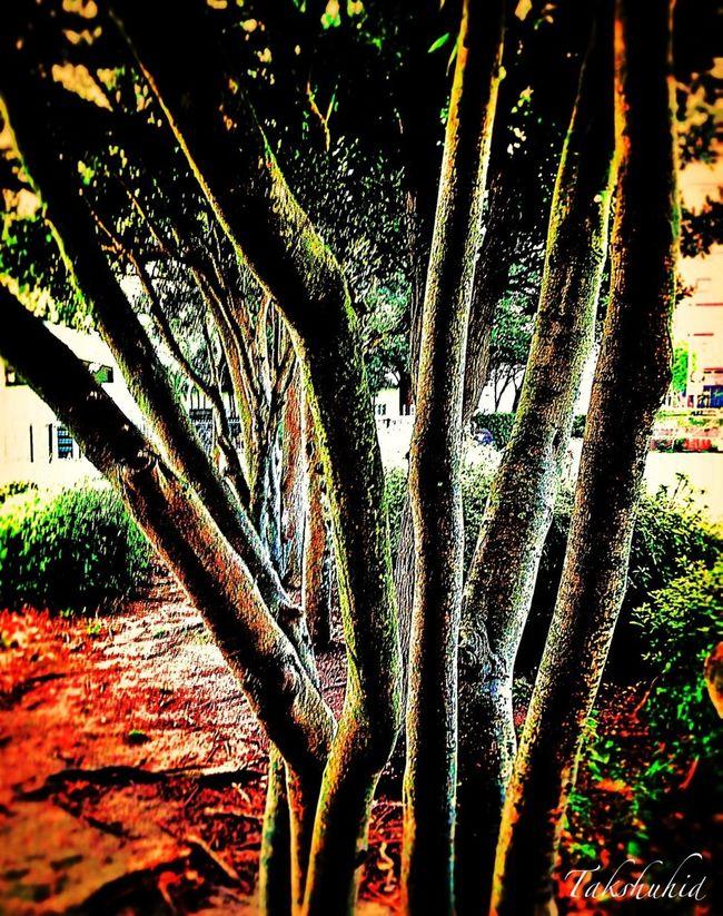 Garden Trees TreePorn Nature_collection