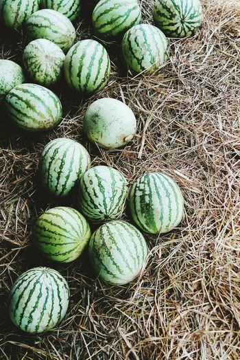 WaterMELONS Hay Spheres BIG Fresh Showcase April Summer Melons