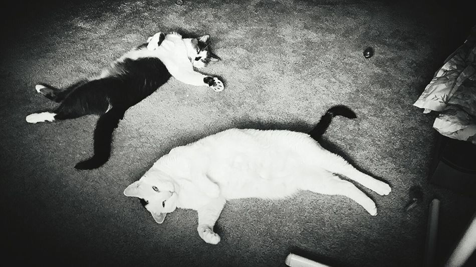 Hanging Out Just Chillin' I Love My Cats  Blackandwhite Photography Cute Pets Cute Cats