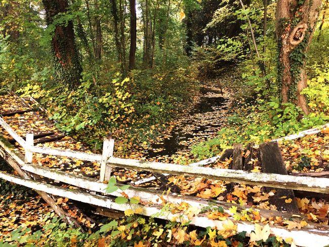 Bridge Oldbridge Outdoors Beauty In Nature Autumn Tree Castle Hedervár Buksi