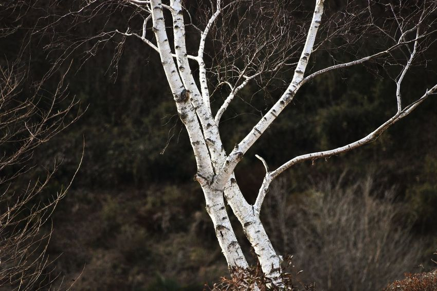 Tree_collection  Nature_collection Hugging A Tree Tree Beautiful Nature Whitetree Winter Trees