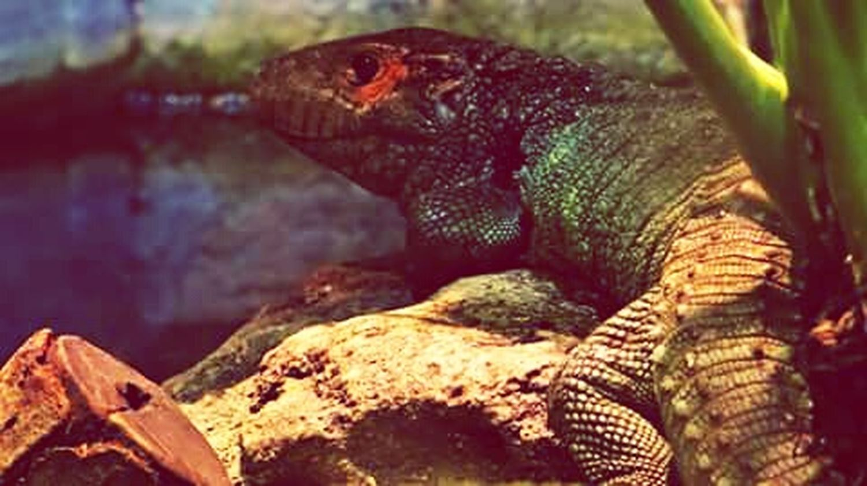 Jacksonville Zoo Reptile Reptilelove Reptilelife Reptile World