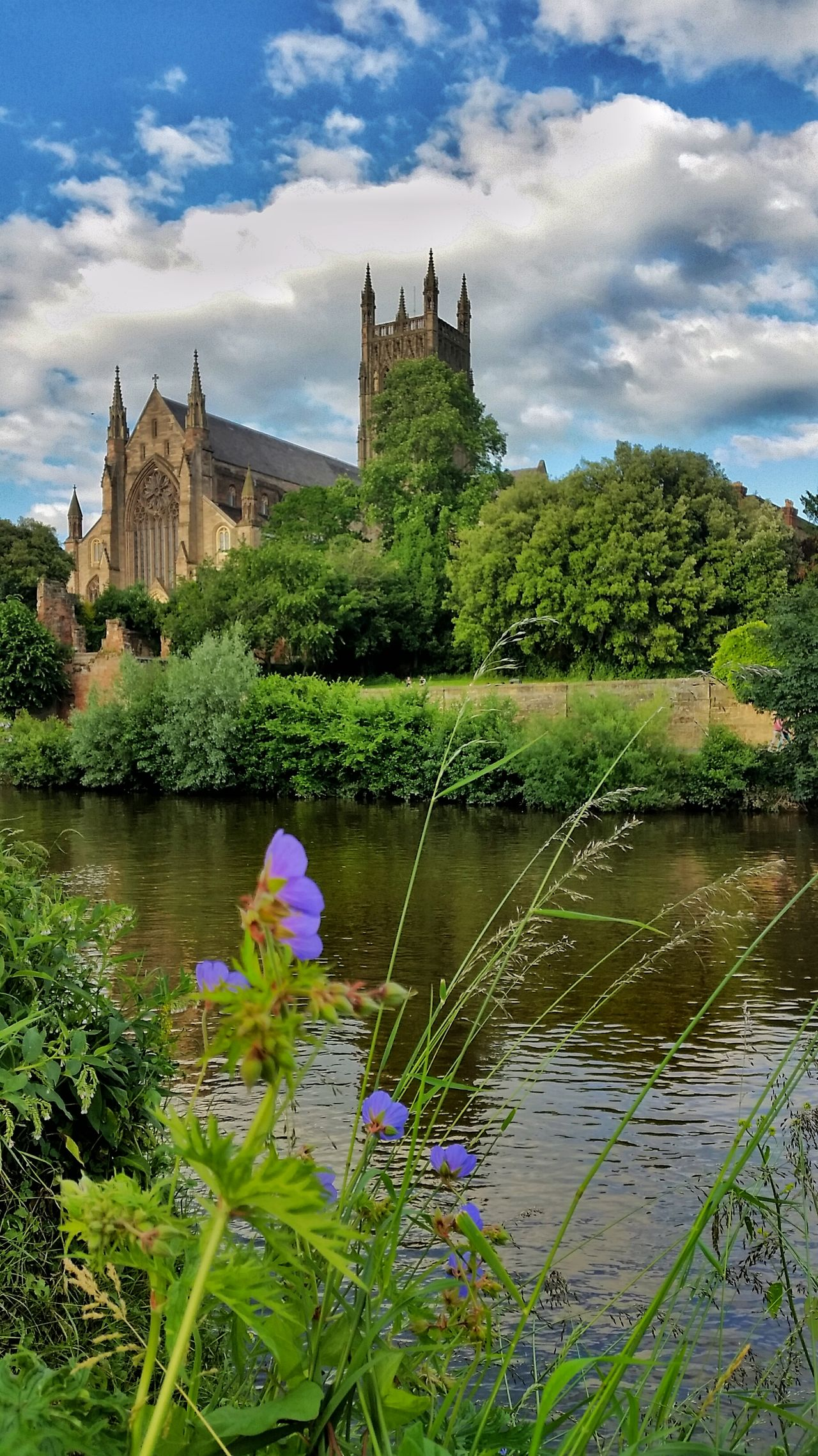 Worcester Cathedral King John's final resting place! River Severn Experimental (Local Commision Work) Historical Building Flowers Cathedral Water Reflections Architectural Detail Summertime England 🌹 Exceptional Photographs Tadaa Community Architecture_collection Eye4photography  Striving For Excellence I Love My City EyeEm Best Shots Water Reflection EyeEm Masterclass Purple Flowers Purple Showcase June