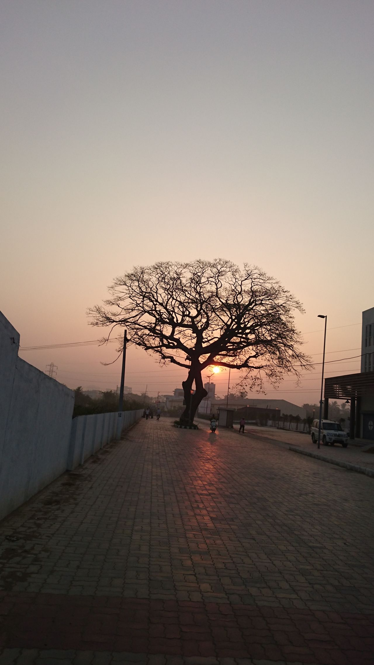 Adult Adults Only Bare Tree Beauty In Nature Day Full Length Nature One Person Outdoors People Silhouette Sky Sunset The City Light Tree