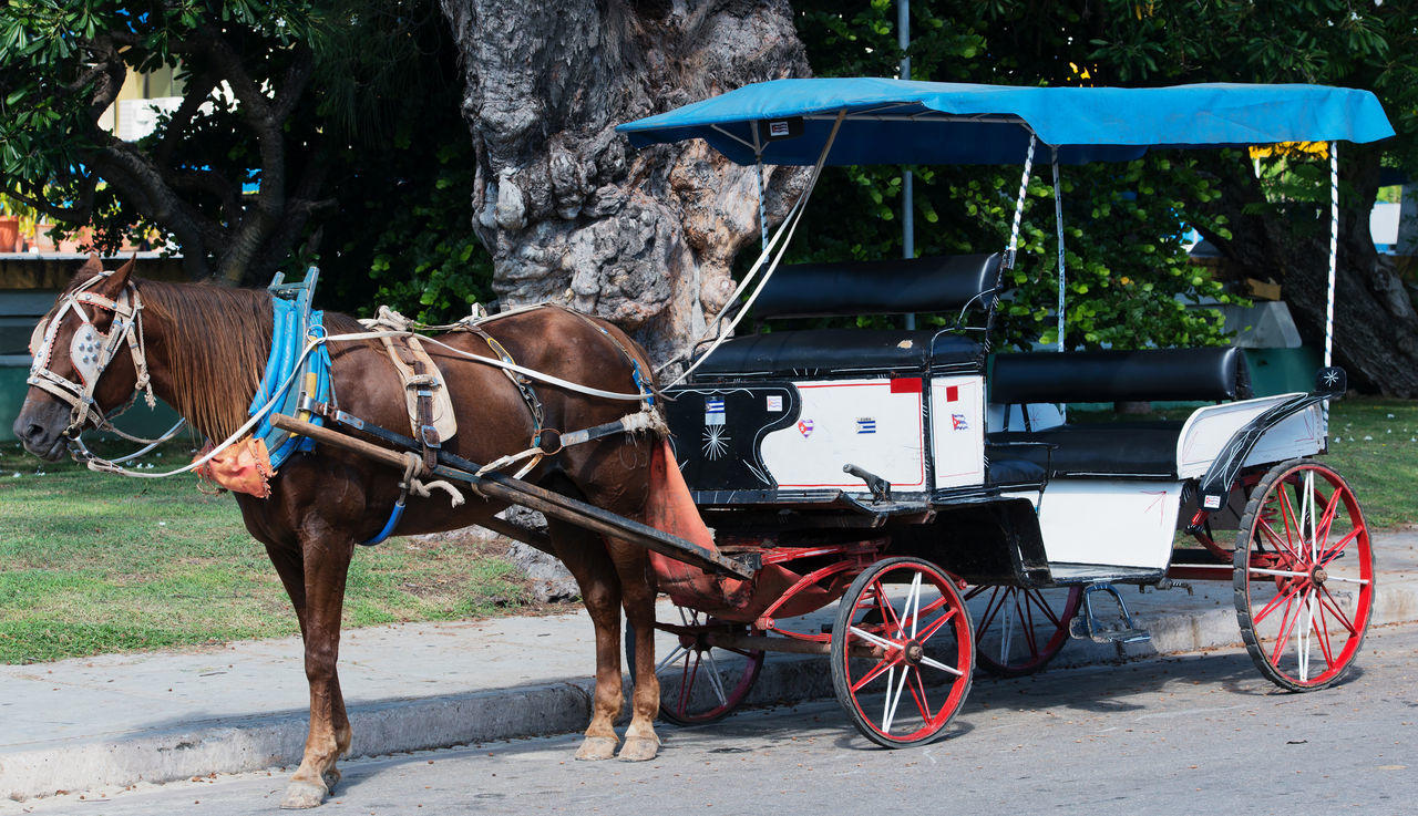 Varadero, Cuba - September 11, 2016: Horse-drawn carriage in Varadero Cuba Animal Themes Classic Cuba Collection Havana Historic Horse-drawn Horse-drawn Carriage Tourism Traditional Transportation Varadero, Cuba