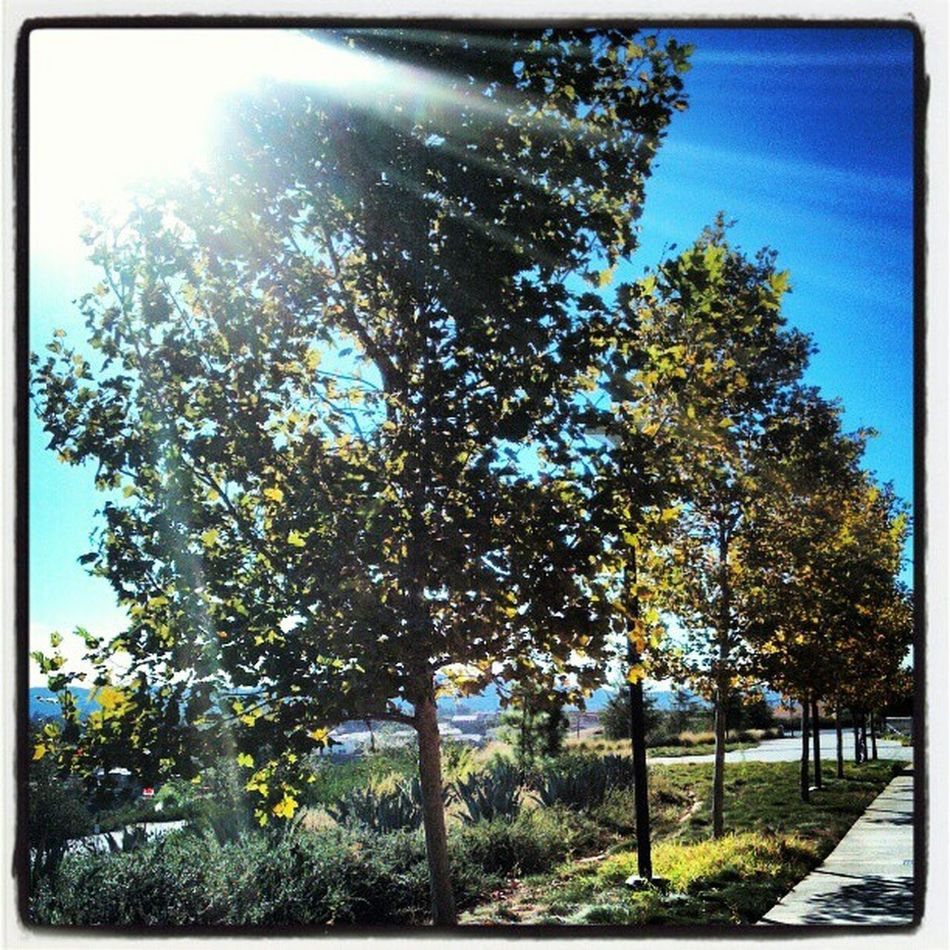 After spending time with God just admiring his creation <3 Trees Scenery School Sunshine Blue Craftonhills