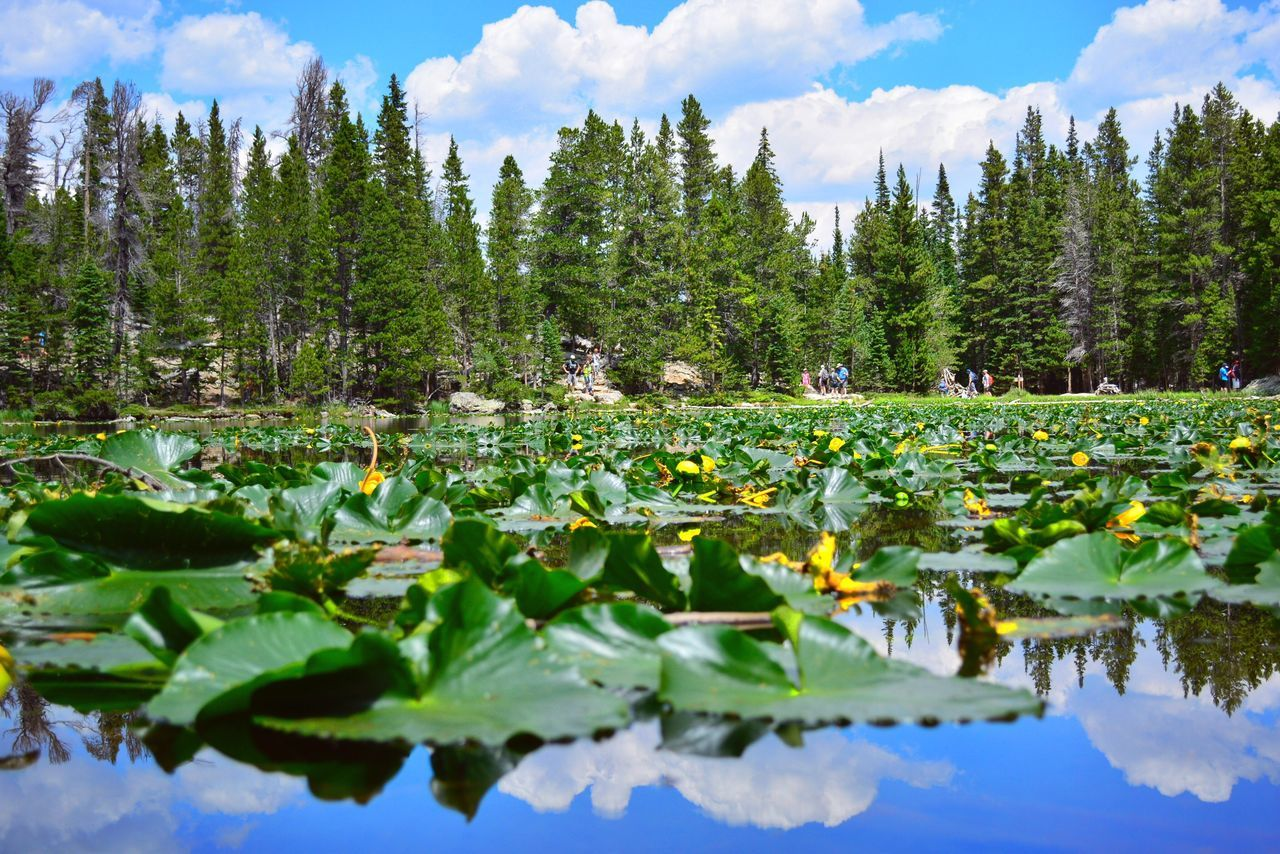 Lily Pond Pond Blue Blue Sky Colorado Adventure Outdoors Explore Colour Of Life Freshair Hiking Scerene Nature Trees Trees And Sky Trees And Water