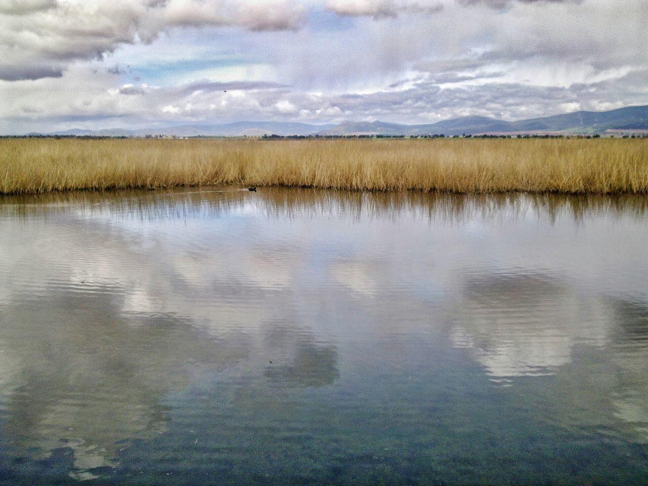 Nature Photography Ducks Lake View Tablas De Daimiel National Park Wetland Park Ciudad Real