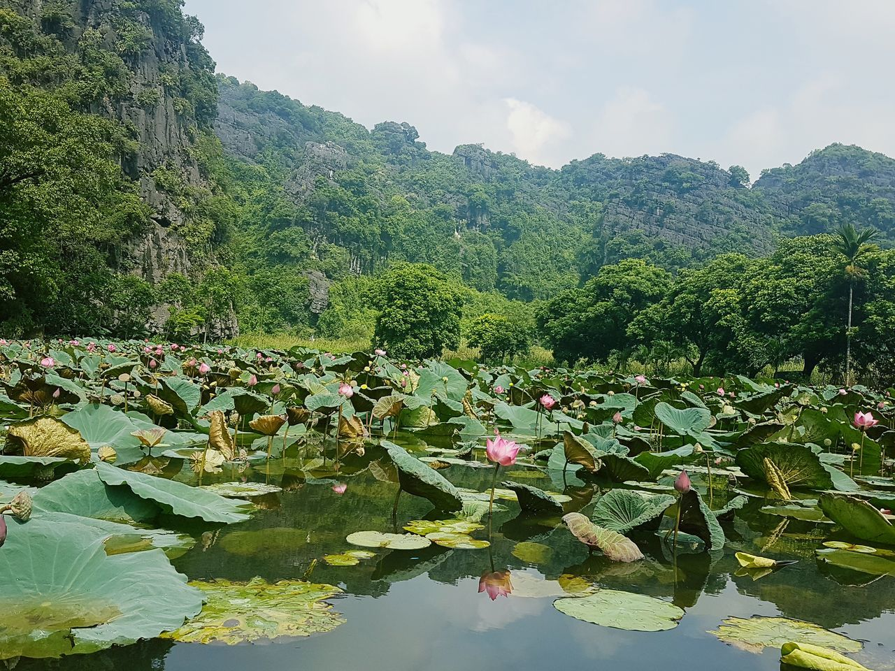 beauty in nature, nature, leaf, growth, water lily, lotus water lily, water, tranquility, green color, floating on water, lake, plant, day, lily pad, scenics, outdoors, tranquil scene, no people, flower, lush foliage, sky, lotus, freshness, fragility, mountain, tree
