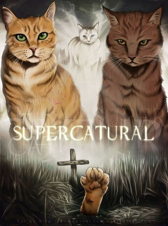 Supernatural ❤ Jensen Ackles Jared Padalecki  Misha Collins Impala67 Cat♡ My Love❤