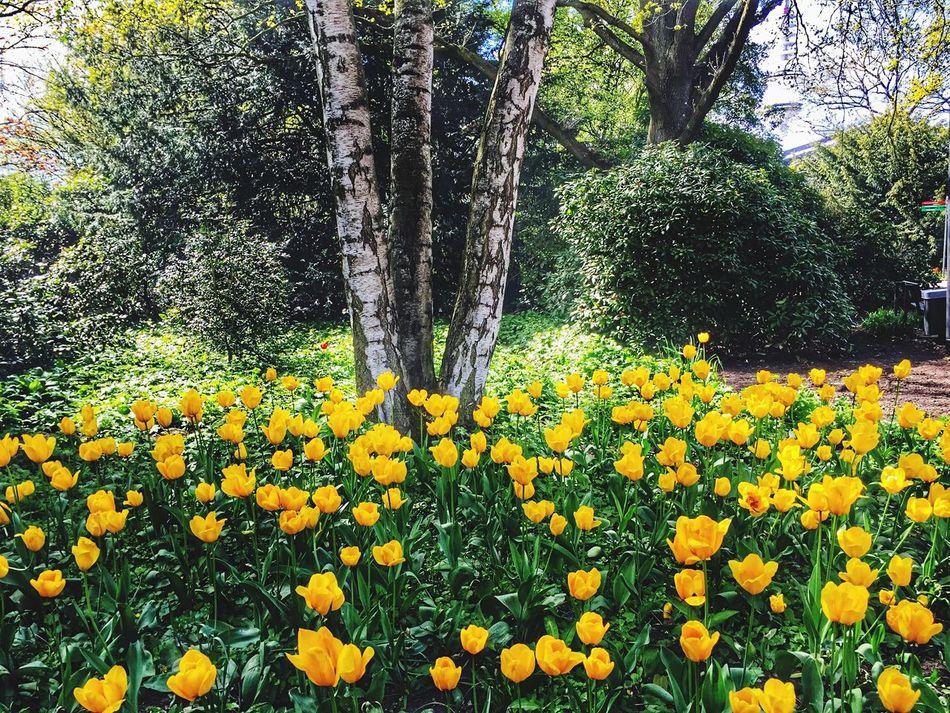 Something Yellow Park Life