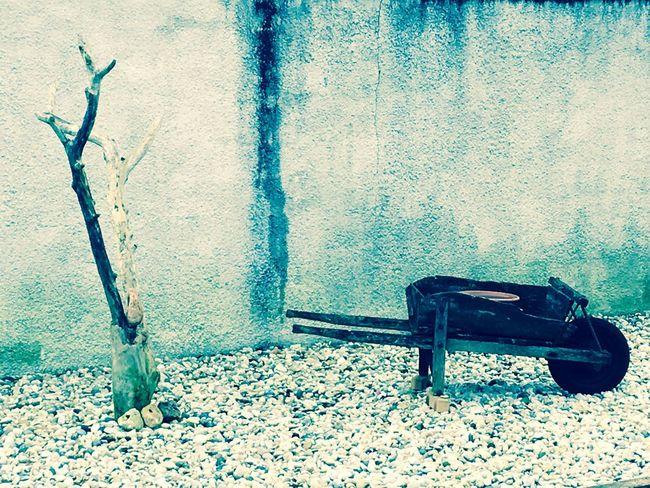 Jardin hiver cissac médoc