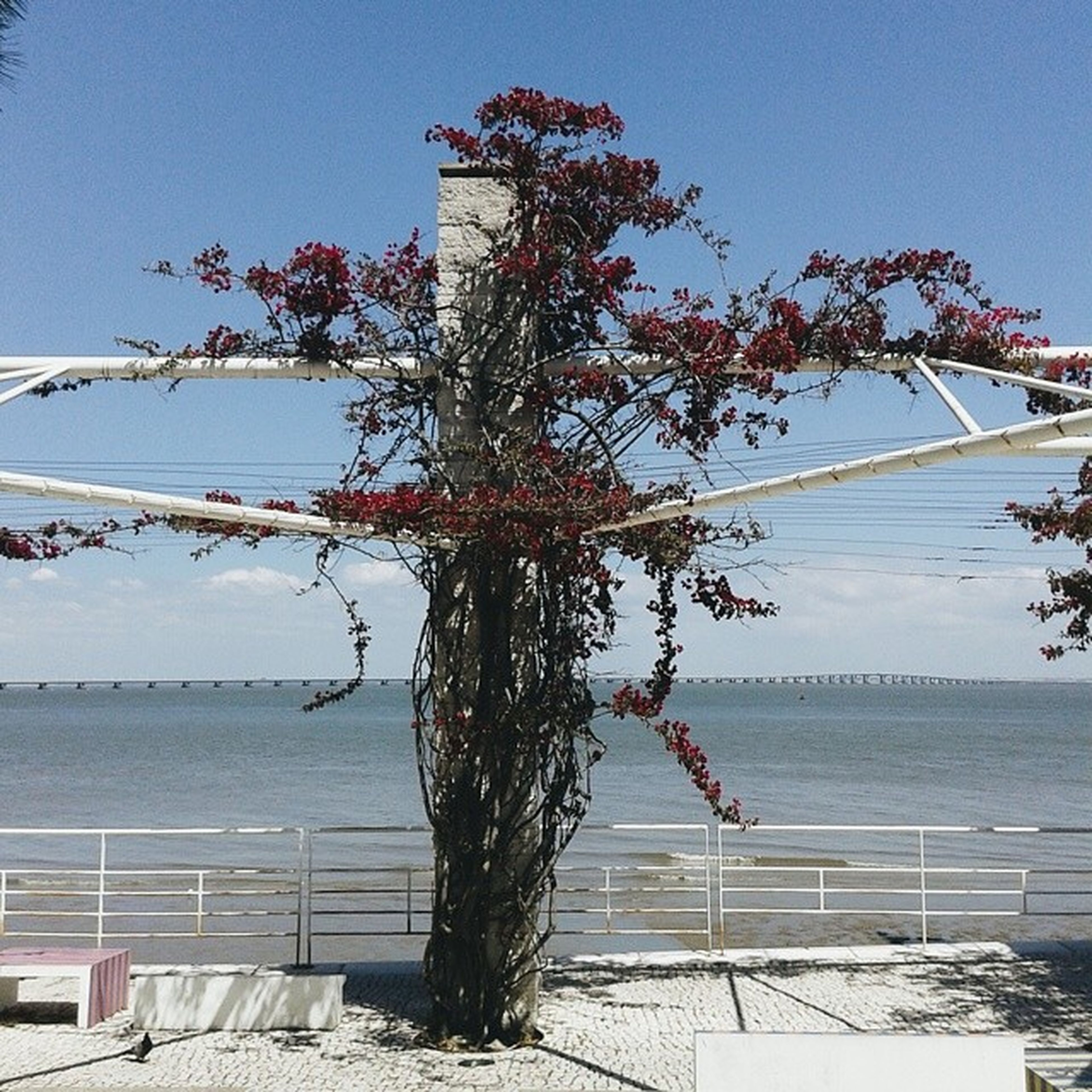 water, clear sky, tree, nature, sky, flower, growth, beauty in nature, railing, tranquility, lake, branch, sea, sunlight, no people, tranquil scene, day, outdoors, plant, scenics