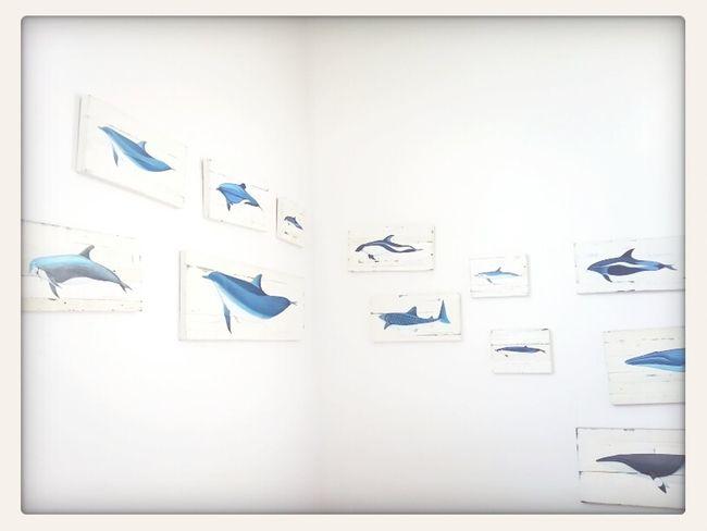 Simplicity Whales Divedomestik Kon-Tiki: Your Adventure