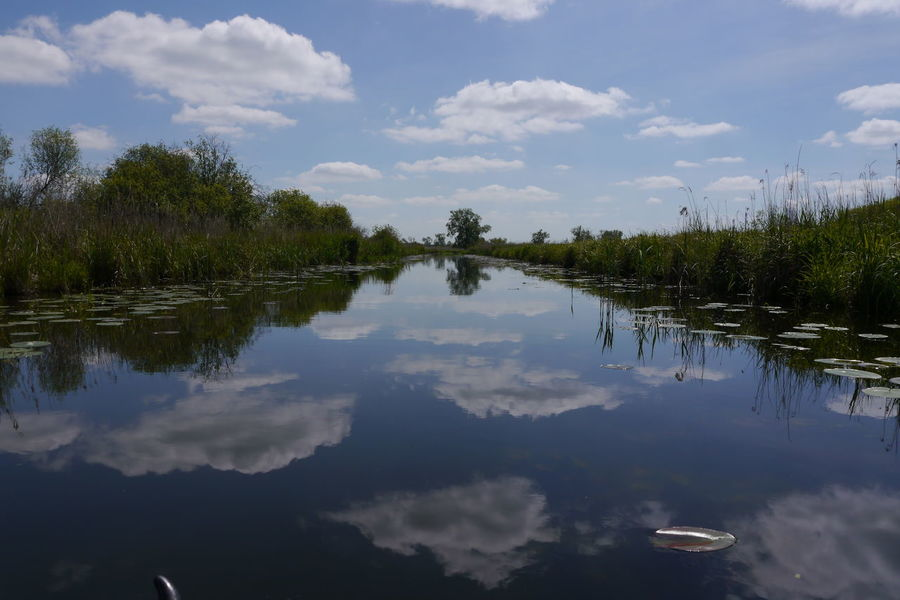 Schilf Beauty In Nature Cloud - Sky Day Lake Nature No People Oder Oderbruch Outdoors Polen Reflection Scenics Sky Tranquil Scene Tranquility Tree Water