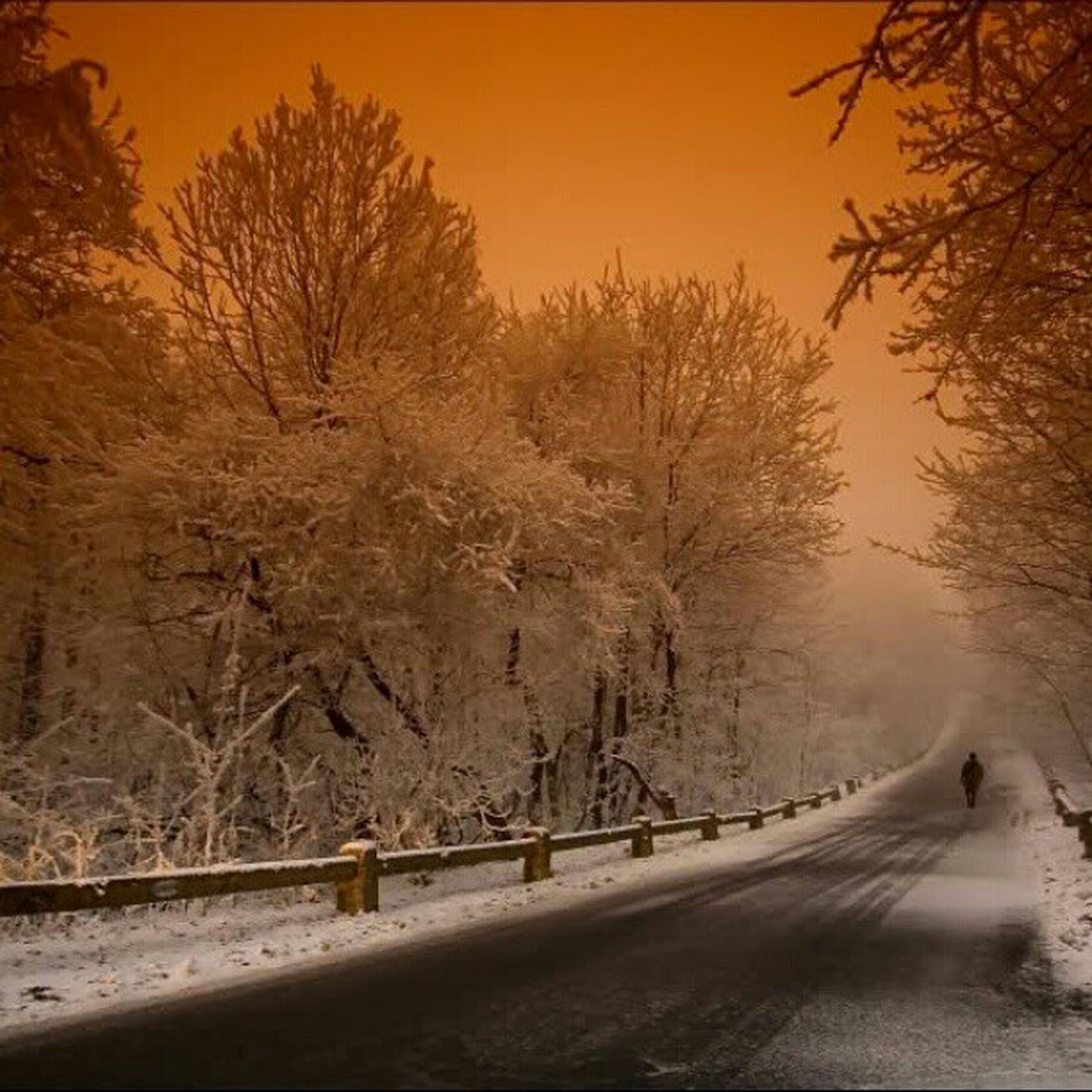 snow, winter, tree, cold temperature, season, bare tree, tranquility, tranquil scene, nature, beauty in nature, scenics, weather, road, branch, the way forward, sunset, frozen, non-urban scene, landscape, outdoors