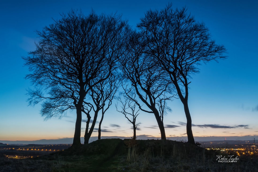 Night falls over the Seven Sisters in County Durham Bare Tree Beauty In Nature Blue Blue Hour Branch Clear Sky Day Landscape Landscape_Collection Nature Night No People Outdoors Scenics Sky Tranquil Scene Tranquility Tree
