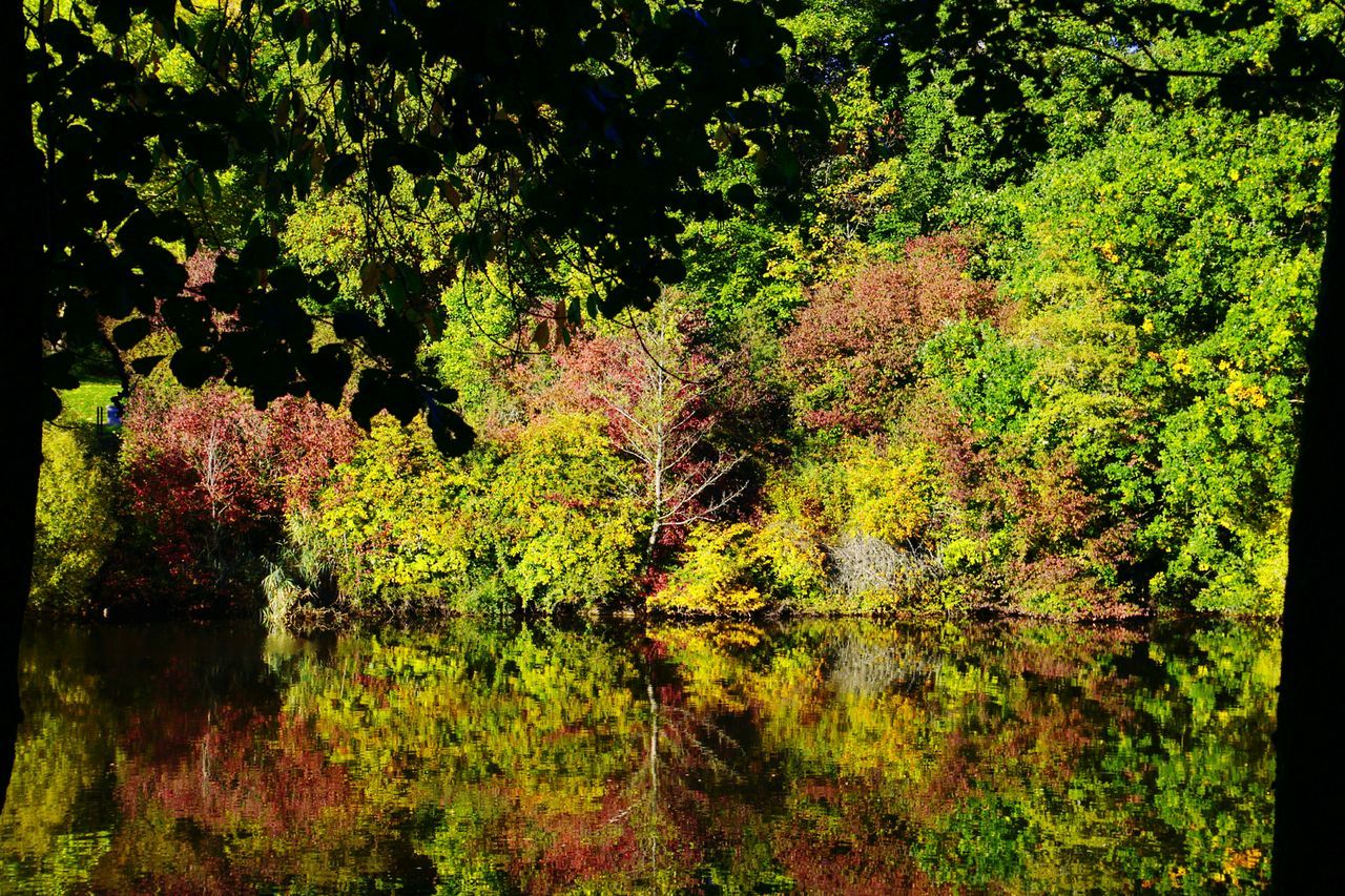 Beautiful Day Peace And Quiet Lake a:1334] Water Reflections Mirror Picture Autumnbeauty Autumn🍁🍁🍁 Autumn Collection Autumn Autumn Colors Autumn 2015 The Beauty Of Fall Twilight Shoots That Make You Look Twice Getting Creative The Adventure Handbook My Best Photo 2015 Adventures Beyond The Ultraworld Pattern Pieces
