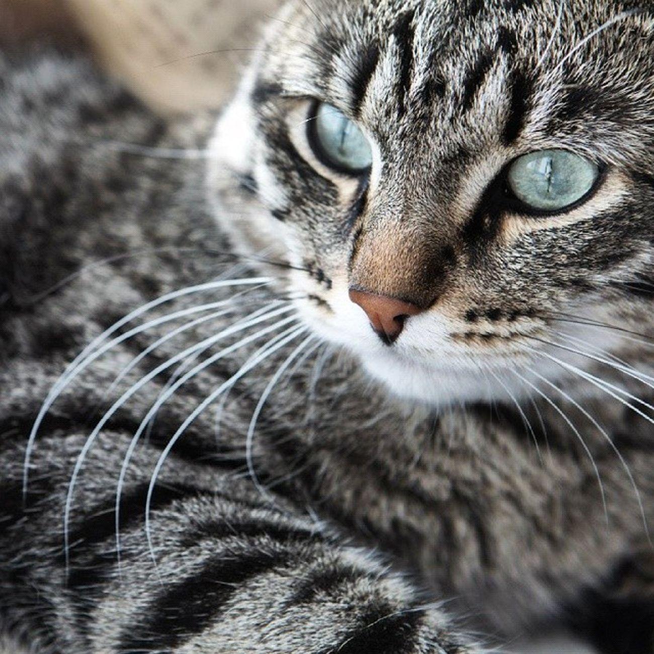 Cat Cats Animals Melkiu