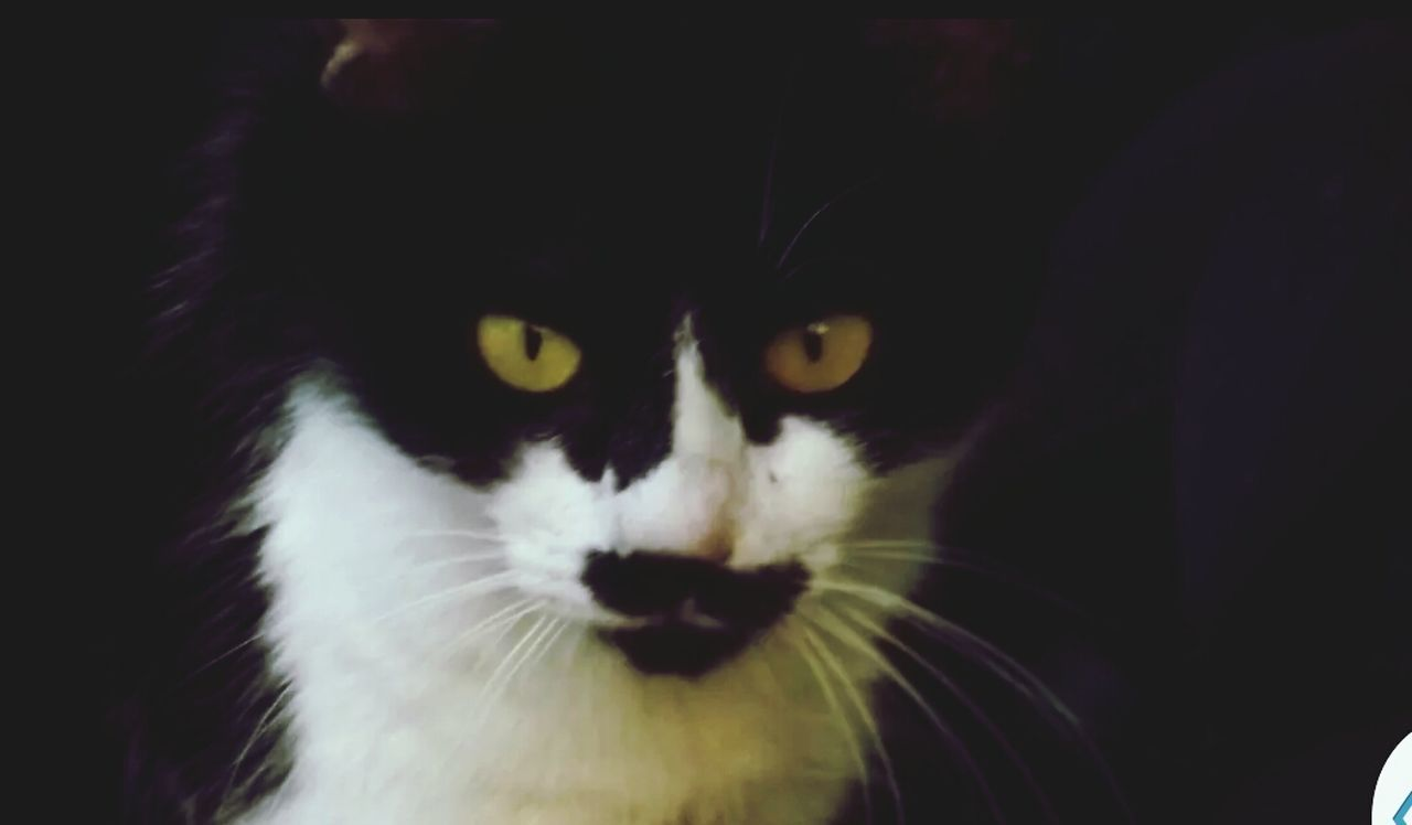 Close-Up Portrait Of Cat With Orange Eyes