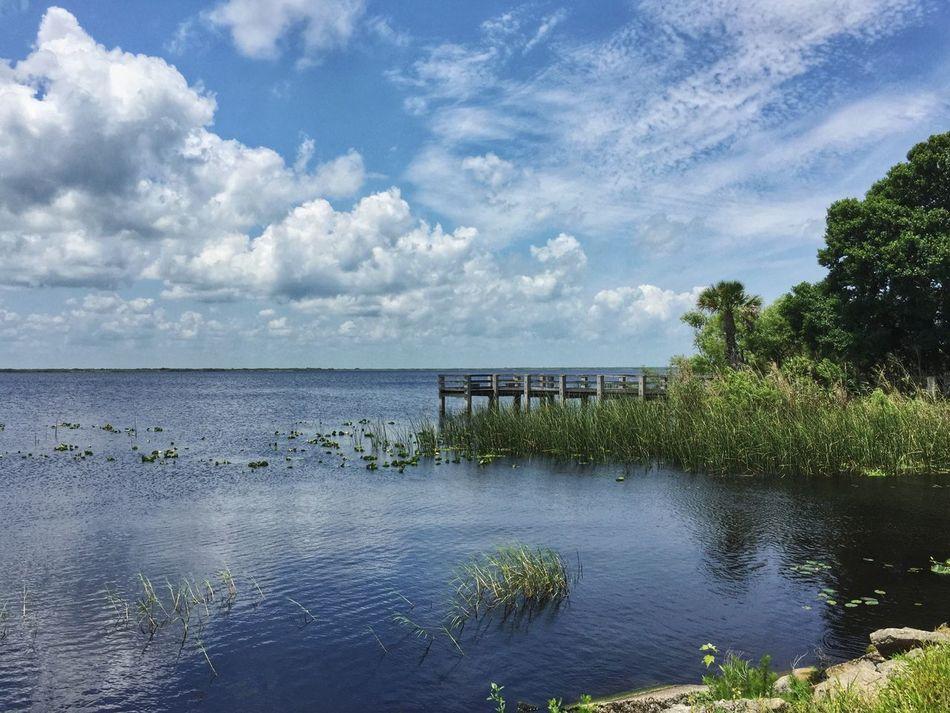 Lake overlook Lake Washington Melbourne Florida Lake View Florida Lake Florida Nature Reeds, Weeds, Marshland, Marsh, Nature's Diversities