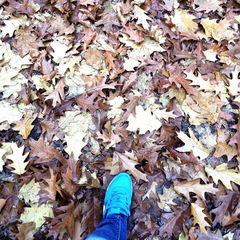 Herbstspaziergang Laub