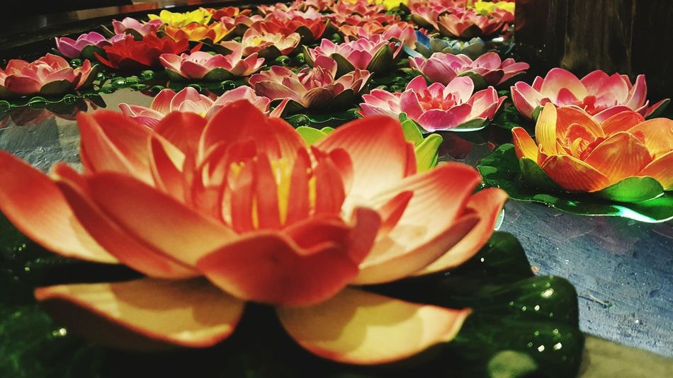 Art Artgallery Chiangrai Chiang Rai Temple - Building Travel Destinations Chiangrai,Thailand Arts Culture And Entertainment Lotus Flower Lotus Lotus Water Lily Lotus Collection